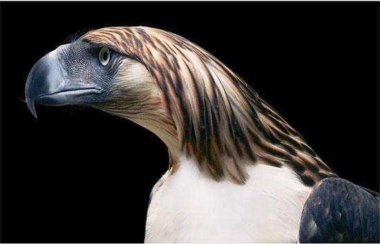 شباهت این پرندگان زیبا و نادر با پرتره های انسانی