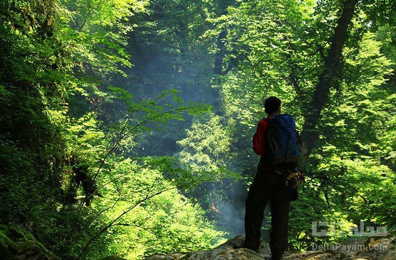 جنگل های انجیلی؛ طبیعت سوادکوه
